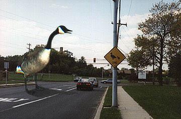 geese_crossing