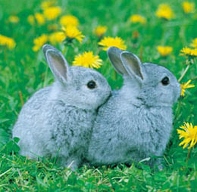 happy bunny pics. What we have is happy bunny