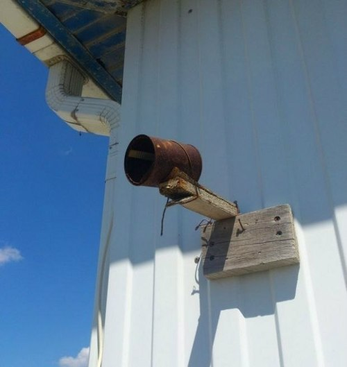 redneck_security_cam