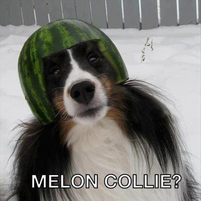 melon_collie