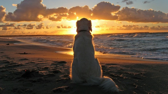 dog_sunrise_all_is_well